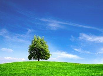 Экологическая безопасность объекта